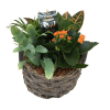 Mixed Wicker Planter standard