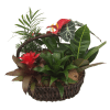 Mixed Wicker Planter