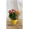 Citrus Tin Planter - 2 Sizes