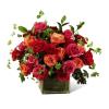 Lush Life Roses FTd premium