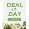 Florist Choice - Holiday premium