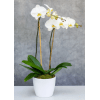 Double Stem White Orchid deluxe