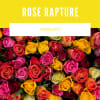 Rose Rapture Vibrant deluxe