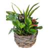 Round Wicker Tropical Planter deluxe