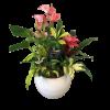Anthurium Bromeliad Planter deluxe