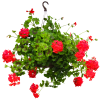 Spring Hanging Basket deluxe