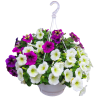 Spring Hanging Basket -1 standard