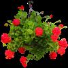 Spring Hanging Basket -1 deluxe