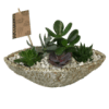 Log planter with Succulents premium