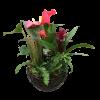 Anthurium Bromeliad Planter standard