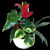 Mixed Planter standard