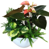 Assorted tropical Planter deluxe