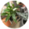DESIGNER CHOICE MIXED PLANT BASKET standard