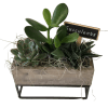Succulents in a raised box standard