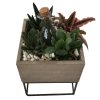 Succulents in a raised box deluxe
