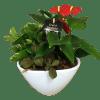 Anthurium Planter Garden standard