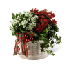 The FTD® Celebrate the Season™ Dishgarden deluxe