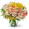 Perfect Peruvian Lilies deluxe