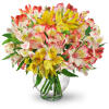 Perfect Peruvian Lilies premium