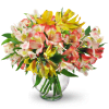 Perfect Peruvian Lilies standard