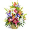 Stargazer Blessings Basket™ deluxe