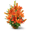 Asiatic Lily Basket premium