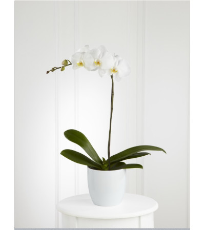 FTD white orchid planter