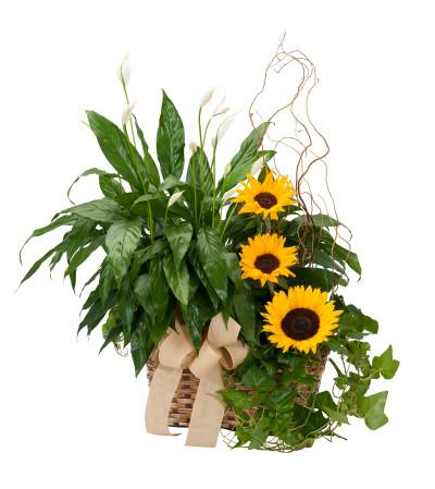 Vivid Memories Plants & Sunshine