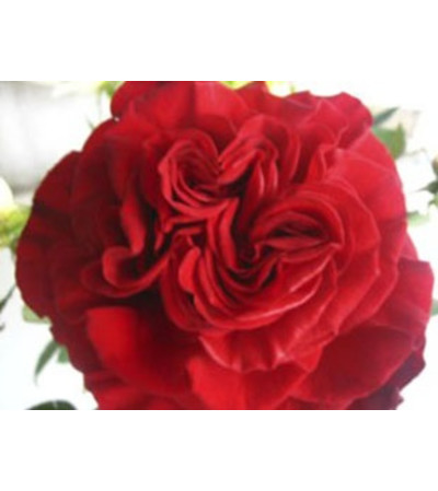 1 Dozen Red Heart Garden Roses Vase Arranged