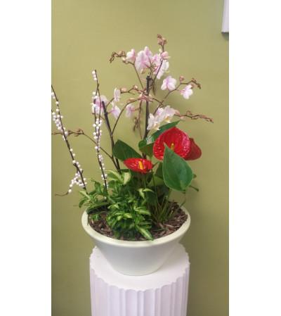 Large Orchid/Anthirium Planter