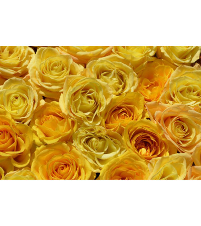 Custom arrangement for yellow lovers