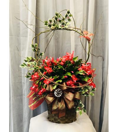 Ellington's Christmas Cactus