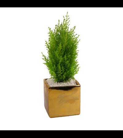Gold Mini Tree