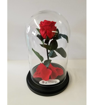 ENCHANTED ROSE RED MEDIUM