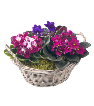 Violets in a basket