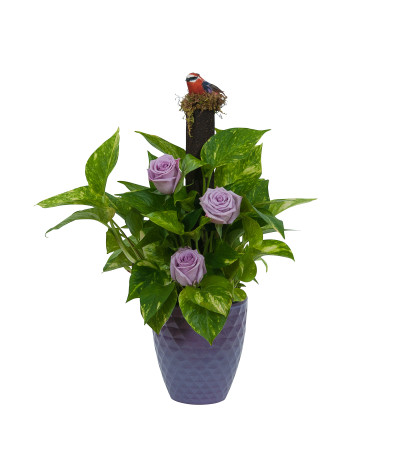 Pothos on Pole with Fresh