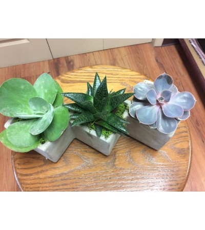 Triple succulent.