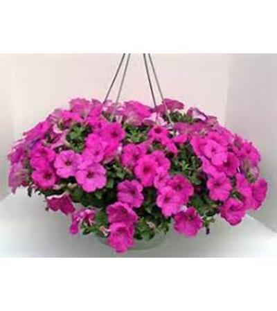 Petunia Hanging Basket