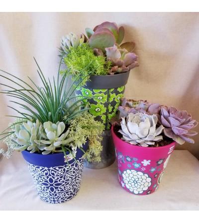 Succulent Garden Pot