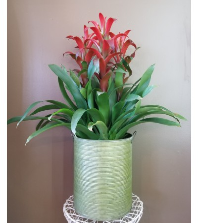 Triple Tropical Blooming Pot