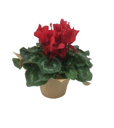 Plant - Cyclamen
