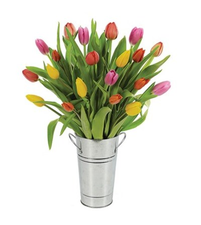 Tulip  - Mixed
