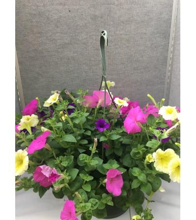Blooming Petunia Hanging Basket