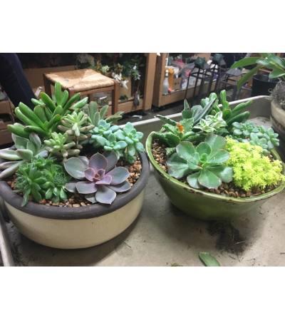 Succulent Gardens Zen