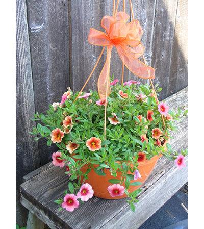 Trixi Hanging Basket