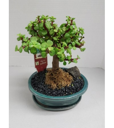 JADE BONSAI