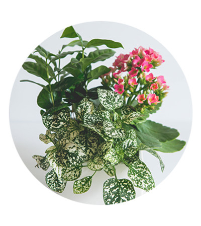 Tropical plant mix