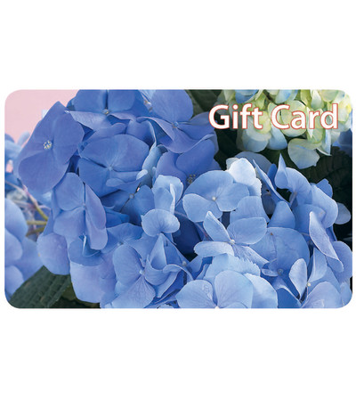 Exceptional Flowers & Gifts- Gift Card
