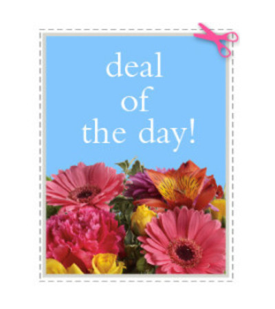 Wrapped Deal of the Day