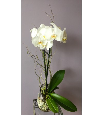 Contemporary White Orchid
